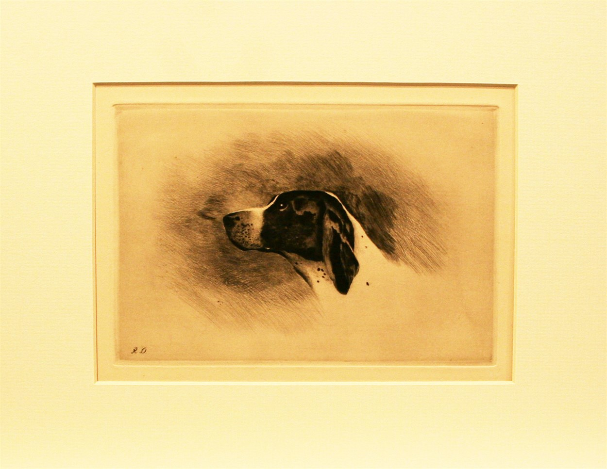 sale of antique prints of animals old england gallery